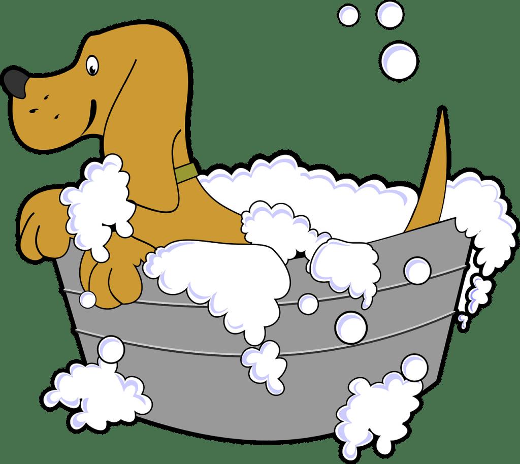 vachtverzorging labrador